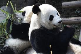 avis jardins de beauval,zooparc de beauval,plus beaux zoos d'europe,zoo enfants